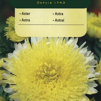 Astra čínská knížecí - žlutá (Vilmorin)