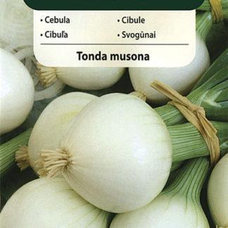Cibule Tonda musona (Vilmorin)