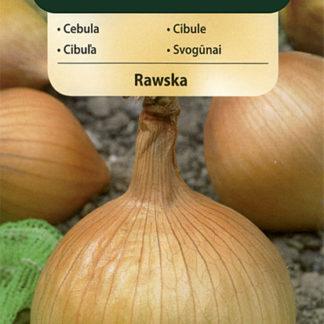 Cibule Rawska (Vilmorin)