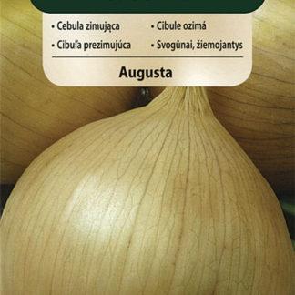Cibule Augusta (Vilmorin)