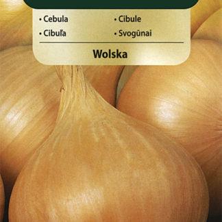 Cibule Wolska (Vilmorin)