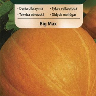 Tykev velkoplodá Big Max (Vilmorin)