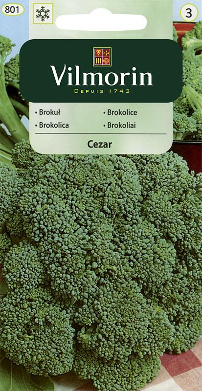 Brokolice Cezar (Vilmorin)