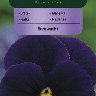 Maceška Bergwacht - fialová (Vilmorin)