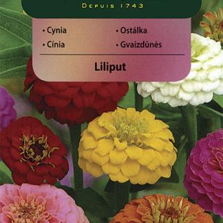 Ostálka sličná Liliput (Vilmorin)