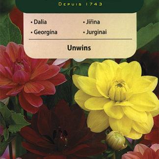 Jiřina Unwins - směs (Vilmorin)