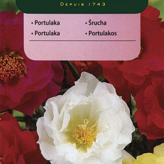 Šrucha velkokvětá - směs (Vilmorin)