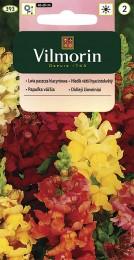 Hledík větší hyacintokvětý (směs)