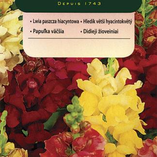Hledík větší hyacintokvětý - směs (Vilmorin)