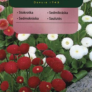 Sedmikráska - směs (Vilmorin)