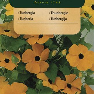 Thunbergie křídlatá - směs (Vilmorin)