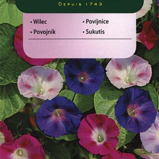 Povíjnice nachová - směs (Vilmorin)