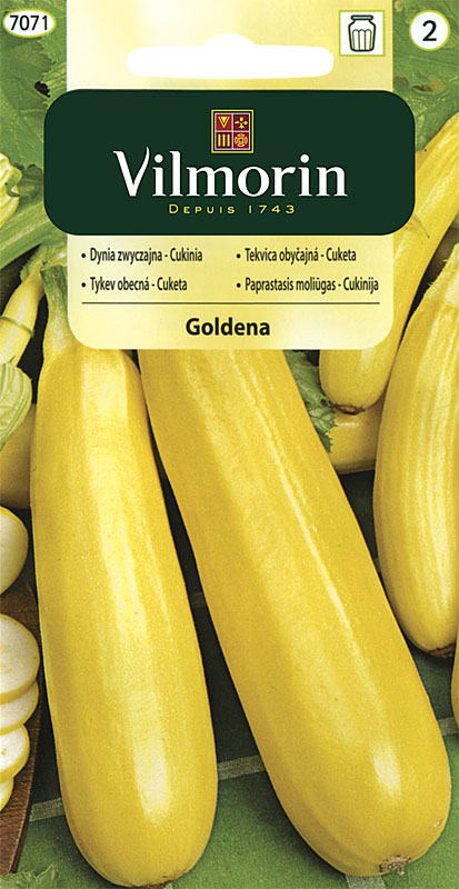 Cuketa (tykev obecná) Goldena (Vilmorin)
