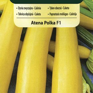 Cuketa (tykev obecná) Atena Polka F1 (Vilmorin)