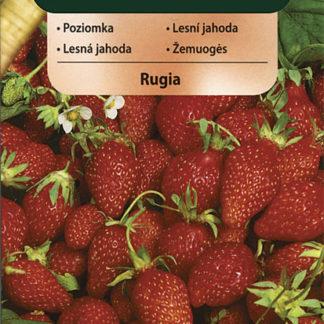 Lesní jahoda Rugia (Vilmorin)