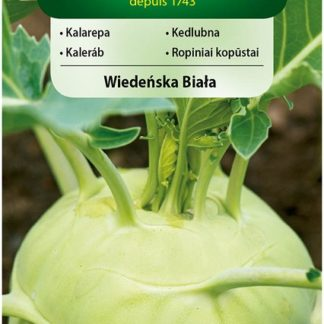 Kedlubna Wiadenska Biala (Vilmorin)