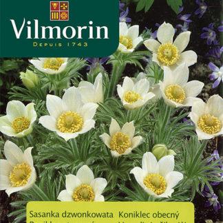 Koniklec obecný - bílý (Vilmorin)