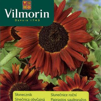 Slunečnice roční Abendsonne (Vilmorin)