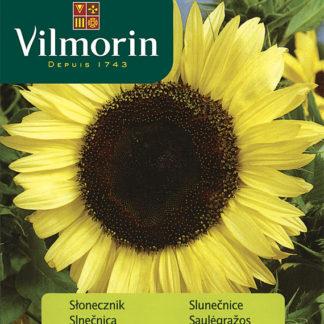 Slunečnice roční Lemon Queen (Vilmorin)
