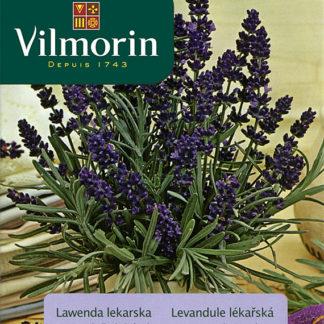 Levandule lékařská (Vilmorin)