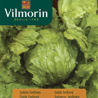 Salát ledový Robinson (Vilmorin)