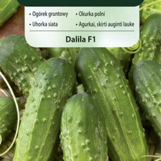 Okurka polní Dalila F1 (Vilmorin)
