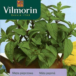 Máta peprná (Vilmorin)