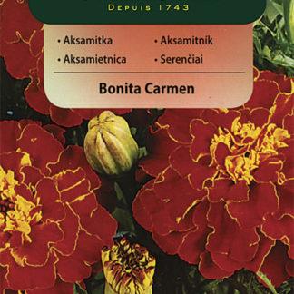Aksamitník rozkladitý Bonita Carmen (Vilmorin)