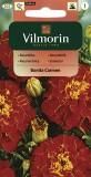 Aksamitník rozkladitý Bonita Carmen