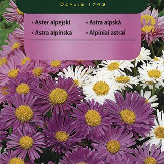 Astra alpská - směs (Vilmorin)