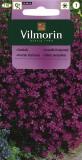 Hvozdík kropenatý (růžový)