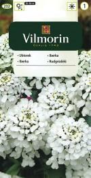 Iberka hyacintokvětá (bílá)