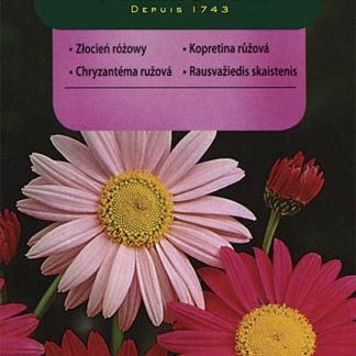 Kopretina řimbaba - růžová (Vilmorin)