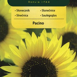 Slunečnice roční Pacino - zakrslá (Vilmorin)