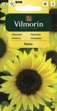 Slunečnice roční Pacino (zakrslá)
