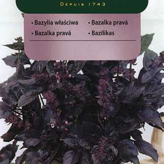 Bazalka pravá červená (Vilmorin)