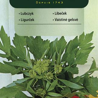 Libeček lékařský (Vilmorin)
