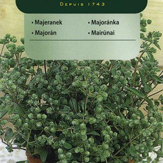Majoránka zahradní (Vilmorin)