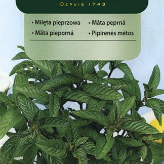 Máta peprná - classic (Vilmorin)