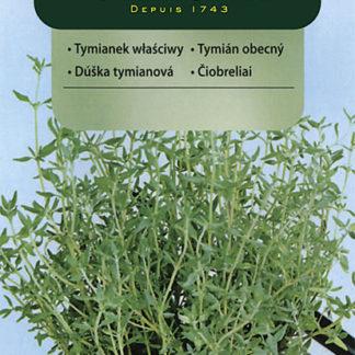 Tymián obecný (Vilmorin)