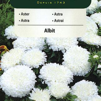 Astra čínská trpaslík Albit - bílá (Vilmorin)