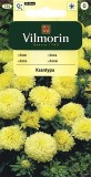 Astra čínská trpaslík Ksantypa (žlutá)