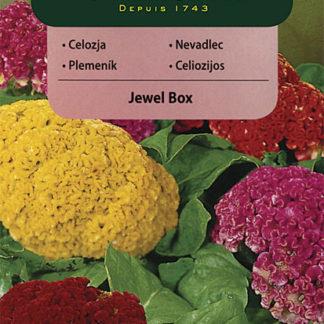 Nevadlec stříbrný hřebenitý Jewel Box - směs (Vilmorin)