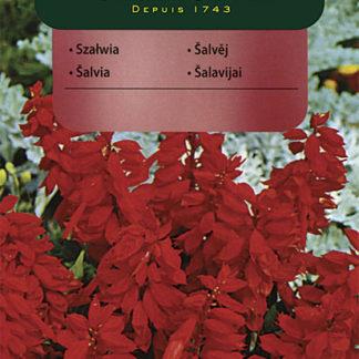 Šalvěj zářivá - červená (Vilmorin)