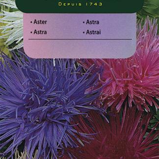 Astra čínská jehlicovitá - směs (Vilmorin)