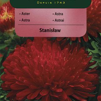 Astra čínská pivoňková Stanislaw - karmínová (Vilmorin)