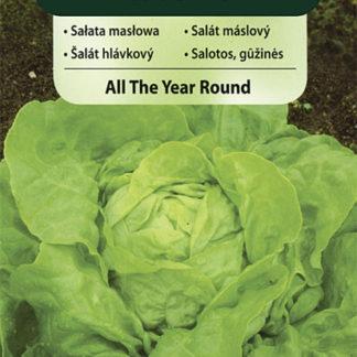Salát máslový All The Year Round (Vilmorin)