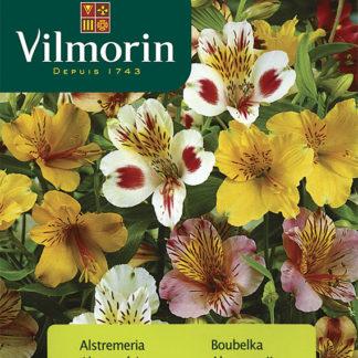 Boubelka - alstroméria (Vilmorin)