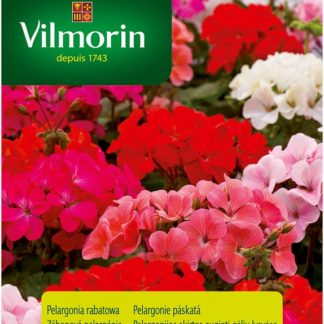 Pelargonie páskatá - směs (Vilmorin)