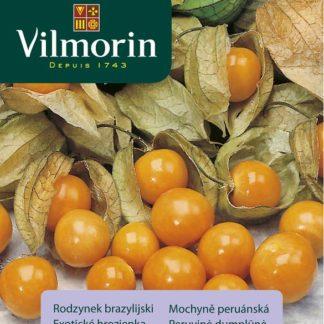 Mochyně peruánská (Vilmorin)